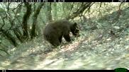 Black bear cub.